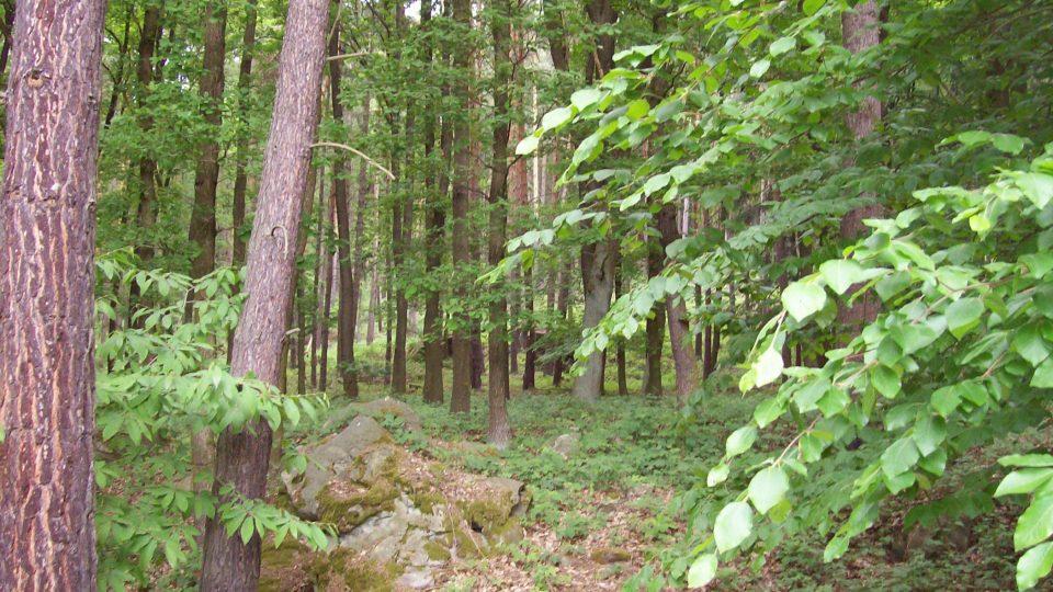 Hibschova stezka byla slavnostně otevřena 1. května roku 1927, tedy ještě za života velkého geologa