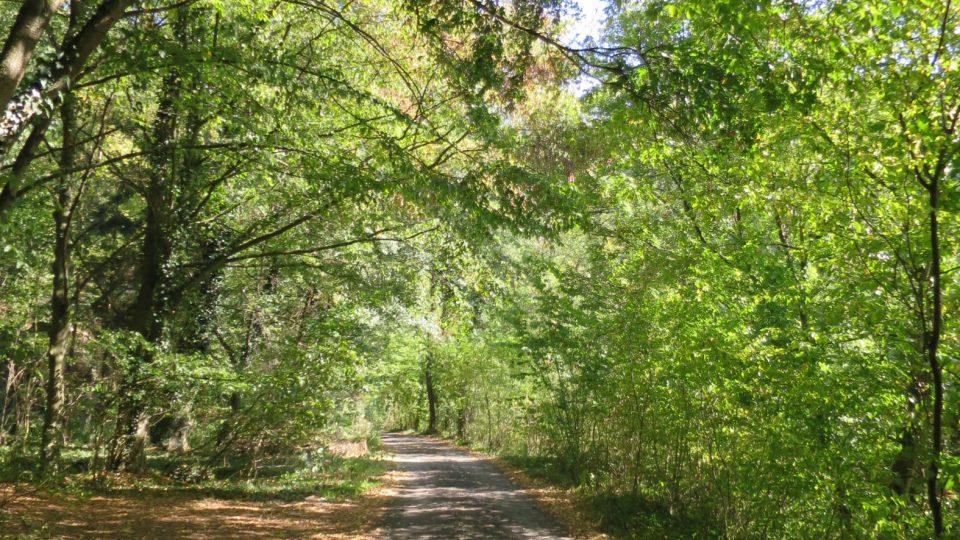 Cesta z Třebenic od hráze pokračuje nejprve pohodlnou lesní cestou kolem chatové oblasti