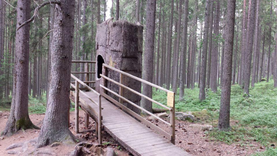 Do dutého stromu se vejde i obézní zvíře