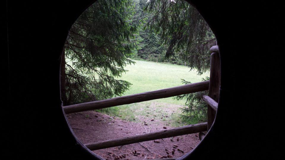 Pohled ze stromového doupěte