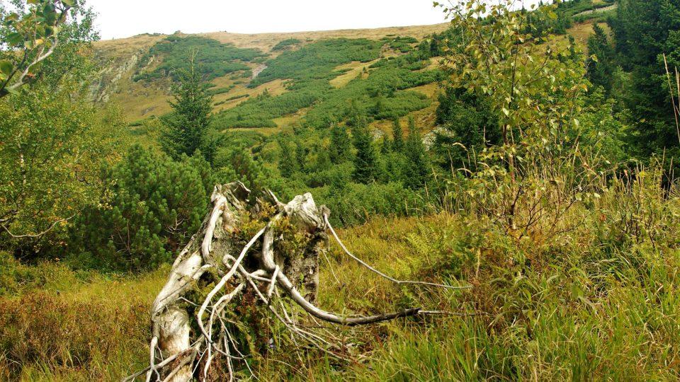Pohled z jedné z tzv. krkonošských zahrádek na Harrachovy plotny, frekventovanou  lavinovou dráhu Krkonoš