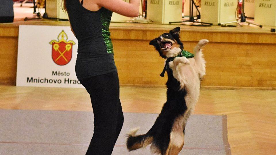 Psí tanečnice jsou většinou border kolie