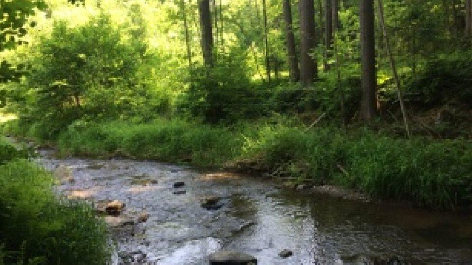V řece není v posledních letech moc vody, zato zákoutí jsou tam pořád krásná