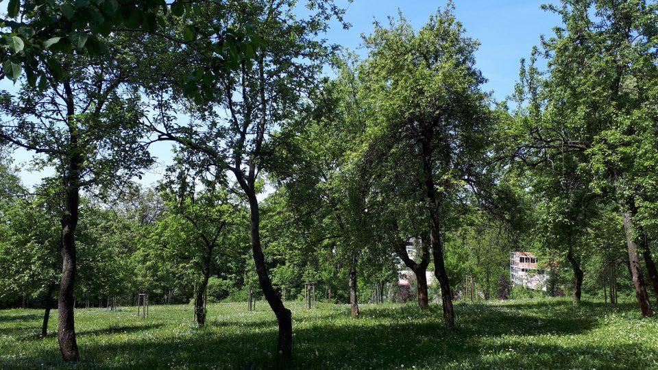 Nově vysazené stromky navazují na staré ovocné dřeviny