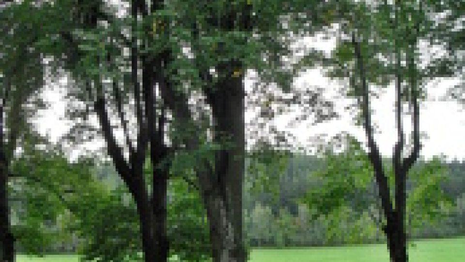 Posezení pod stromy