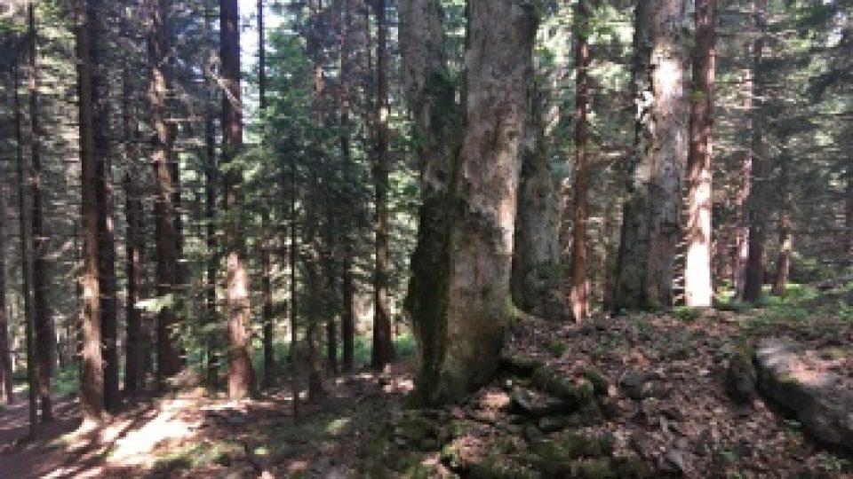 Pramen je ukrytý v lese pod cestou