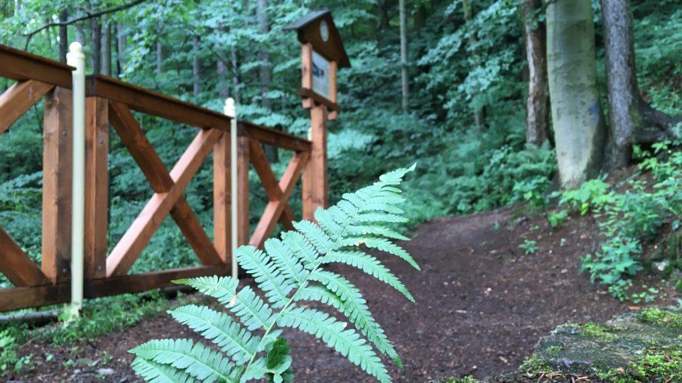 Část stezky vede lesem