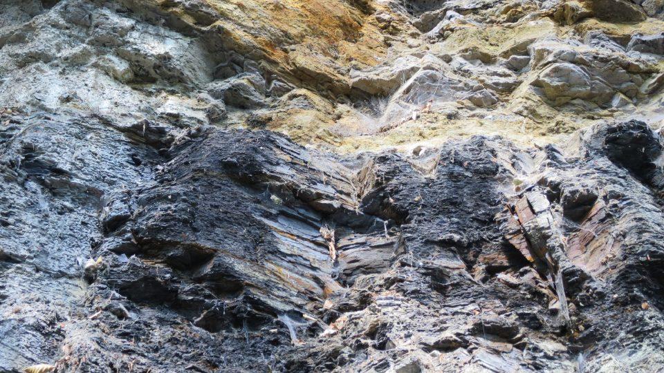 V černé vrstvě se nacházejí zbytky prehistorických rostlin