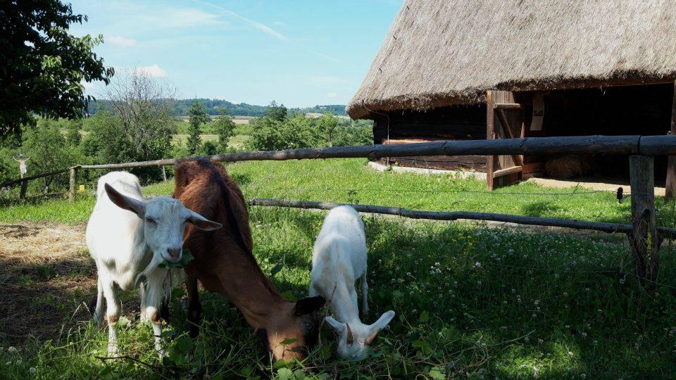 Součástí péče o zahradu je také starost o hospodářská zvířata