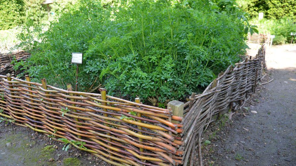 Z vrbového proutí můžeme vyrobit obruby záhonů