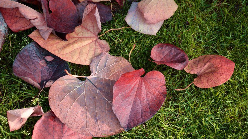 Listy na podzim