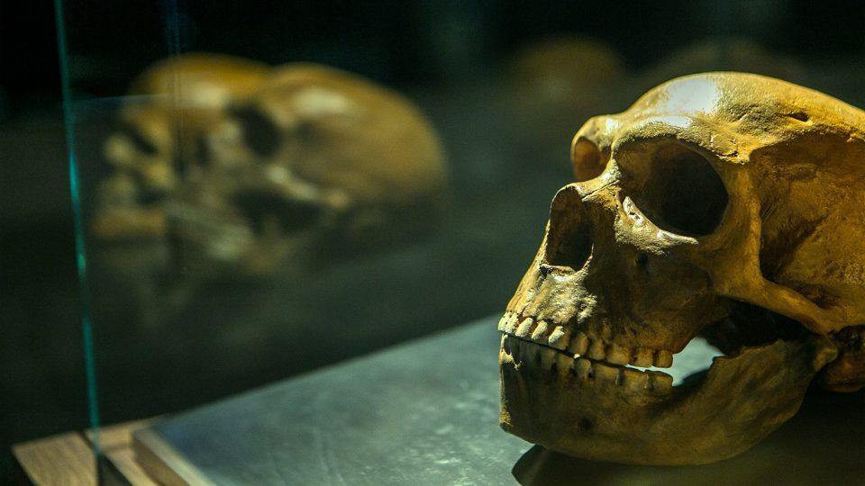 Lidská lebka v Archeoparku Pavlov