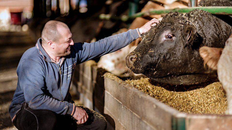 Než začal Václav Vilímovský farmařit, krávu prý nikdy zblízka neviděl