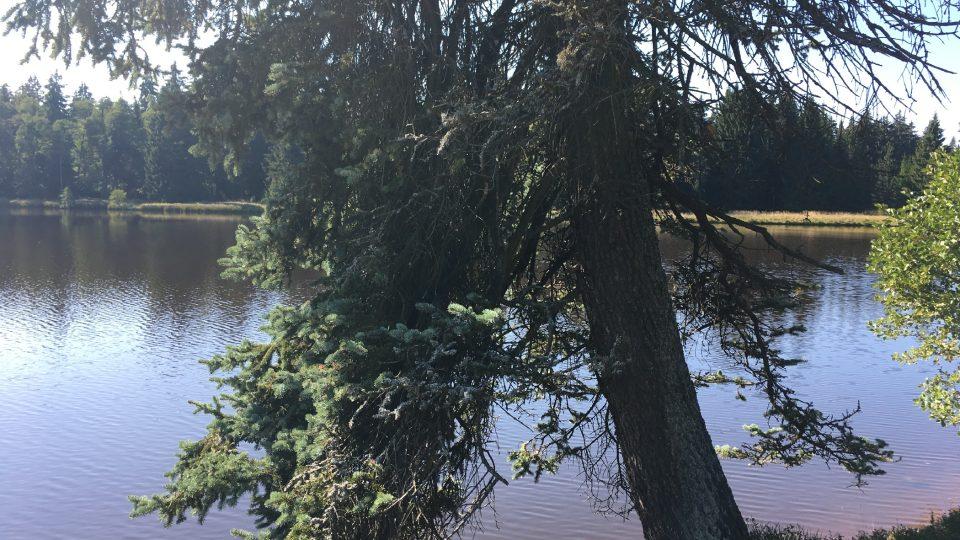 Kouzlo mýtského rybníka