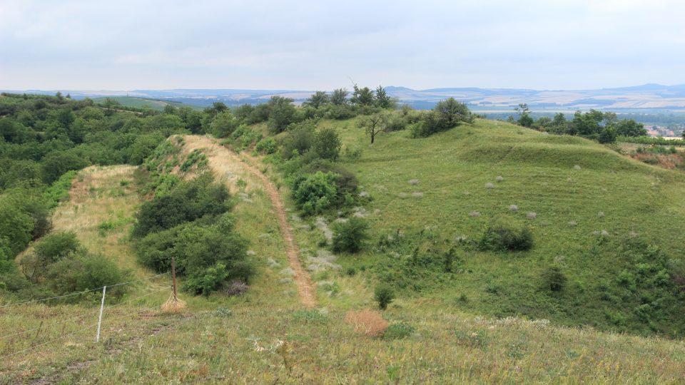 Dunajovické kopce jsou národní přírodní památkou