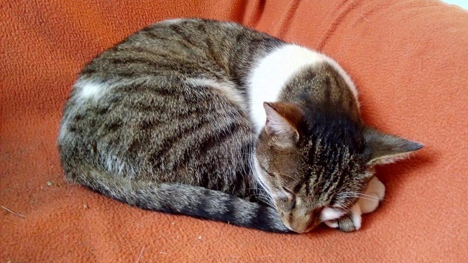 Kočka Růženka z pardubické Pohádkové zahrady
