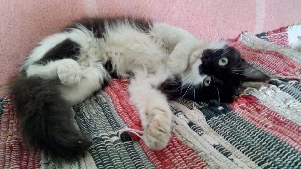 Přijďte si pohrát s koťaty do Pohádkové zahrady Pardubice