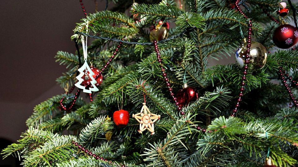 Až vánoční stromek přestane zdobit, může být ještě užitečný