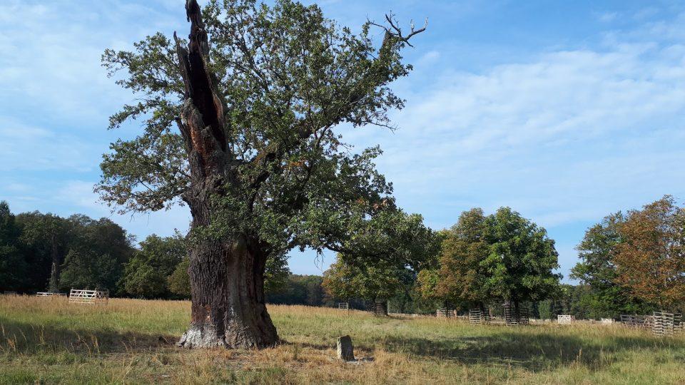 Dohodový dub je starý téměř 400 let. V roce 1925 se tady sešli státníci z Československa, Jugoslávie a Rumunska. Události dodnes připomíná pamětní kámen