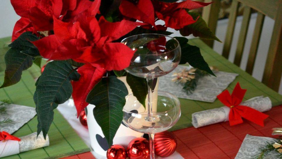 Když budeme o vánoční hvězdu dobře pečovat, zkrášlí náš štědrovečerní stůl