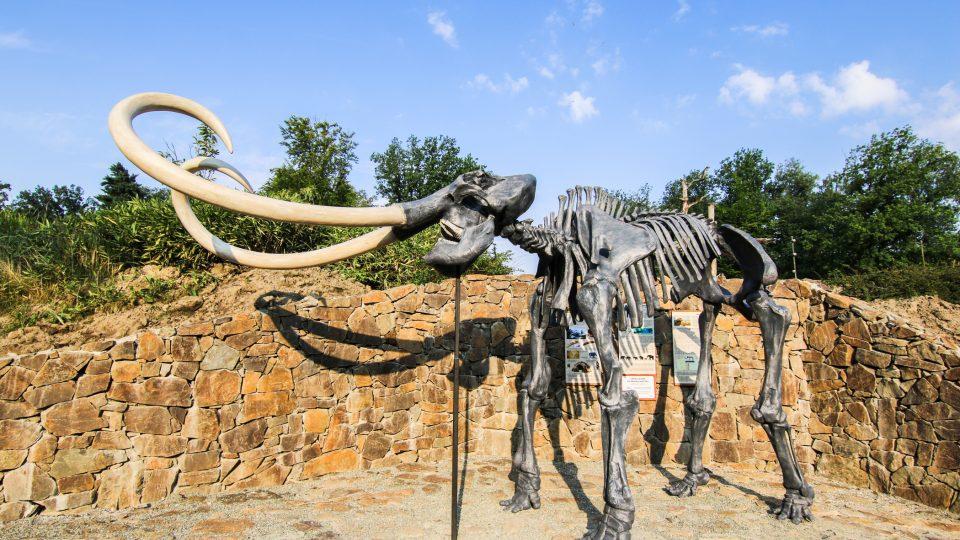 Tato kostra je velmi oblíbená především mezi dětmi. Je to mamut srstnatý
