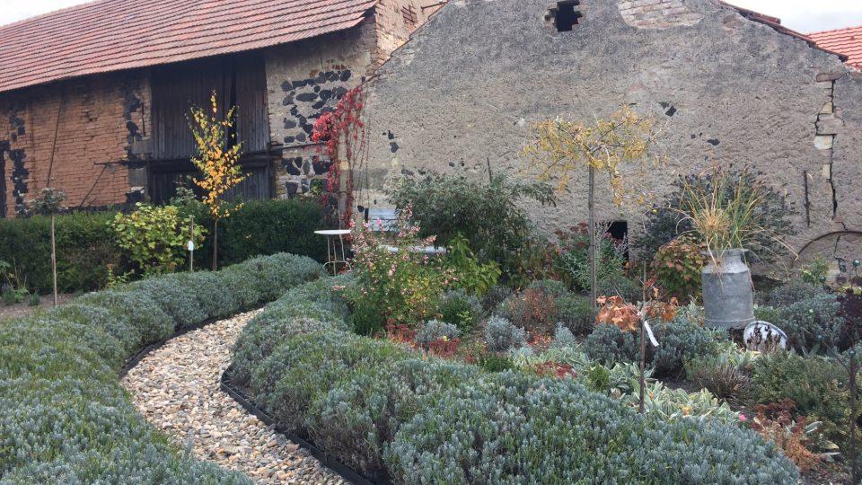 Levandulová zahrada v Klapý